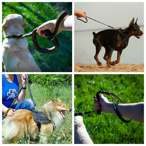 Fordogtrainers - Laisse pour chien pas cher ...