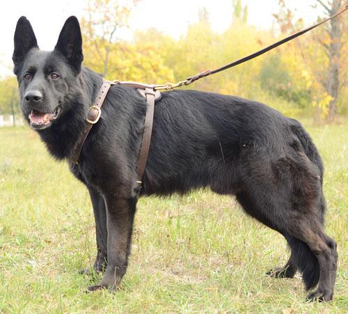 Harnais en cuir pour chien moyen et grand «Promenade